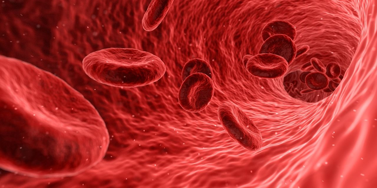 An image of blood cells