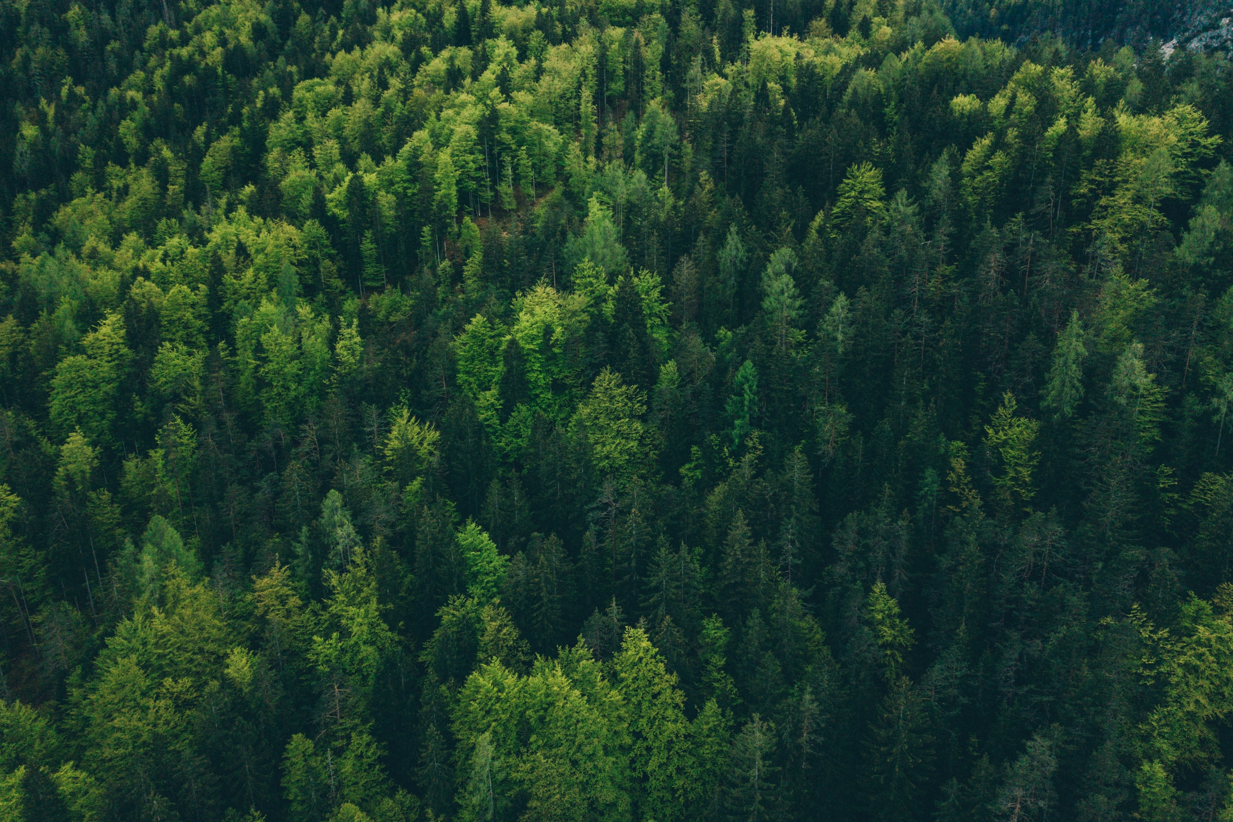 A photograph of a forest from above - taken in a helicopter, or drone.